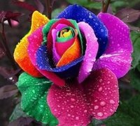 Wholesale Cheap Colorful Rainbow Rose Seeds Plant Garden Beautiful Flower Seeds Seeds Per Package Flower Seeds For Sale