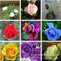 Wholesale New Varieties Colors Rose Per Package Flower For Home Garden Common Seeds