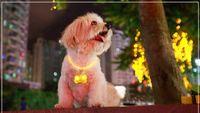 Wholesale Pet Dog Bone Pendant pendant Dog Tag Jewelry LED light flash loss prevention