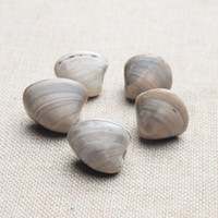 bamboo for furniture - Natural Shell Fossil Goods Of Furniture For Display For Use Mineral Teaching Specimen Children
