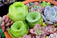 Wholesale 100 Rare Mix Succulent Plants Seeds Multicapacity Process Organic Garden Bulk Seed S015