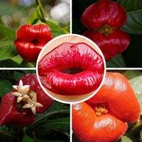 Wholesale 2016 free ship planters Psychotria Elata Flower of Lips seeds like sexy lips Bonsai plants Seeds seeds
