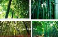 bambusa bamboo - Rare purple Timor Bamboo Seeds Bambusa black tree seeds package