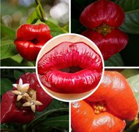 Wholesale 100pcs Lips flower seeds Psychotria Elata Flower of Lips seeds like sexy lips Bonsai plants Seeds for home garden