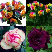 Семена цветущие Цены-2016 Free-Shipping Красочный Радуга розы Семена Фиолетовый Красный Черный Розовый Желтые розы Семена растений / Садовые семена красивый цветок HY1157