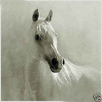 beautiful horse paintings - Beautiful White Horse Genuine Handpainted Art oil Painting On Canvas Museum Quality in any size chosen