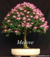 Cheap Albizia julibrissin Mimosa Silk Tree Flower 50 Pcs Seeds DIY Home Garden Bonsai Tree Seeds