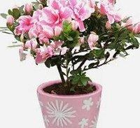 1000pcs в комплект розовый цвет Бугенвиль Le кукушка цветок семена дома сад DIY хороший подарок для вашего друга Пожалуйста, лелеять