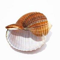 achat en gros de carapaces de crabe de gros-Natural ziqee ermite crabe crustacés poisson pot rouleau de vis Home Furnishing Méditerranée aquarium en gros conch shells