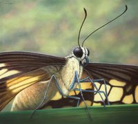 artwork portraits - Modern Giclee Wall Artwork Squat Home Decoration Art Prints portrait of a butterfly