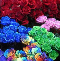 Wholesale THIS ORDER INCLUDE PACKS EACH COLOR SEEDS CHINESE ROSE SEEDS Rainbow Pink Black White Red Purple Green Blue Rose Seeds Z00470