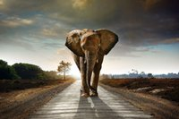 african american art prints - African Elephant mammal Animal Art Fabric Poster Print Picture x36 inch