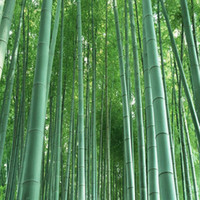 bamboo tree indoors - 160pcs freshly picked selection of bamboo seeds garden decoration Mao bamboo tree seeds Living room indoor potted plants potted