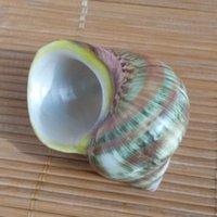 aquarium cat fish - Natural specimens of conch shells need green snail green cat coil shell fish crab aquarium decoration