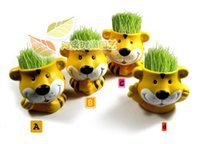 Wholesale REAL Grass New Arrival real planting grass little vase Good for gift decoration color little tiger