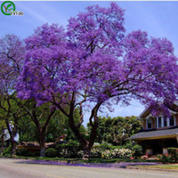 Cheap Jacaranda Seeds bonsai tree 100% true seed in-kind shooting home garden plant 20pcs W016