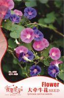 Wholesale Flower morning glory Seeds Original Package Garden bonsai Flower seeds Easy Grow Ipomoea nil bags per