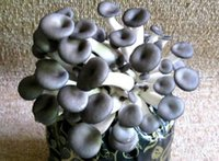 abalone mushrooms - 100pcs a set abalone mushroom vegetable seed ddd HOME GARDEN DIY GOOD GIFT FOR YOUR FRIEND Please cherish it