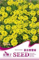 alyssum seed - Flower Lobularia maritima Seeds Original Package Garden bonsai Flower seeds Easy Grow Sweet alyssum bags per