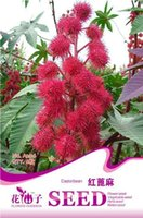 Wholesale Red Castor New Seeds Charming Fragrance Bright High Quality Rare Flower Seeds Garden Supplies from China