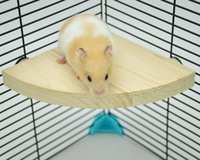 Wholesale Wooden Small Animals Platform Fan Shape Springboard for Cage