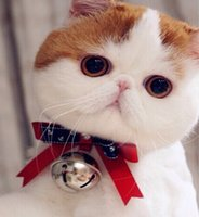 Wholesale teddy kitten collar cute tiny bow tie with big bell red blue bows random style