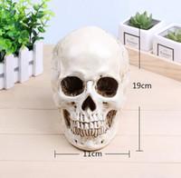 Wholesale Medical Archeology1 human skull model life size resin skull model art class model teaching delicate human skeleton model B179