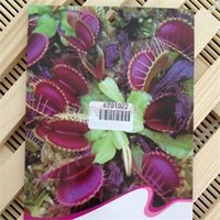 Wholesale New Brief Novetly Potted Insectivorous Plant Seeds Dionaea Muscipula Giant Clip Venus Flytrap Seeds