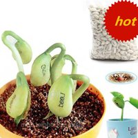 Wholesale 100pcs Printing magic message bean seeds Plant Growing Message Word Bean Bonsai Green Home Decoration garden tool