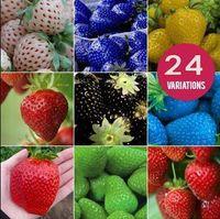 Cheap Fruit seeds strawberry seeds DIY Garden fruit seeds potted plants 24 kinds strawberry seeds 50pcs lot