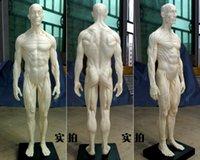anatomical head - 30cm PU human skeleton anatomical model Skull Head Muscle Bone Medical Artist Drawing in trauma for sale