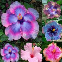 artificial hibiscus flowers - Rare Mix Colors Giant Hibiscus Seeds Potted Plant Perennial Flowers Seed