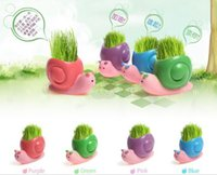 Wholesale REAL Grass New Arrival real planting grass little vase Good for gift decoration Snails