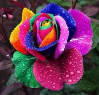 Wholesale 100 Seeds pack Rare Holland Rainbow Rose Seeds Flower Home Garden rare rainbow rose flower seeds