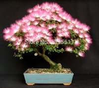 Wholesale 20 bag Bonsai Perfume Albizia Flower Seeds Mimosa Seeds Silk Tree long flowering mini bonsai tree seeds potted plants