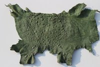 Wholesale EXOTIC BUFO TOAD FROG COLLECTIBLE LEATHER TAXIDERMY HIDE SKIN CRAFT Green