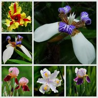 beautiful indoor plants - Indoor potted seed Iris Iris orchid plant seed beautiful choice of colors particles bag