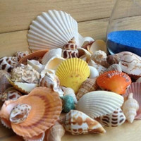 Wholesale Natural conch shells combination package exquisite scallop Mediterranean style Natural shell Pack Fish Tank Aquarium Decoration