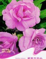balsamina plant - Garden Balsam Seeds Impatiens Balsamina Flower Plants A143