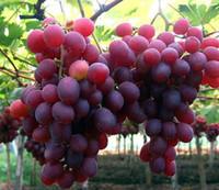 bagged fertilizer - 50pcs bag fertilizer fruit seed grape seed fruit balcony potted