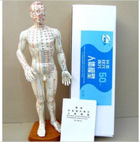 acupoint model - Ultra clear human acupoint model model of meridian acupuncture meridian model Shanghai human model