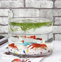 Wholesale The new shipping transparent glass cylinder tank hydroponic containers Home Decoration Creative eco goldfish bowl