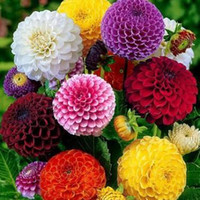 Wholesale Non Hybrid Mixed Zinnia Elegans Seeds Flower Richly Flowering Garden Easy to grow DIY garden