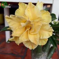 Wholesale High germination rate Desert rose seeds Flower Pot Planters Garden Bonsai Flower Seed Particles b016