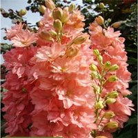 Wholesale Flower seeds Delphinium Seeds beautiful Flower Plant home garden flower plant AA