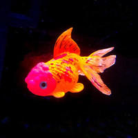 Wholesale Artificial Glowing Goldfish Decoration Aquarium Fish Tank Decorations Fish Pattern Good Quality Silicon Drop Shipping Random Color