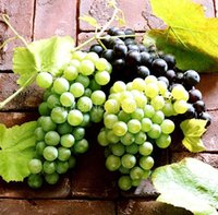 Wholesale 50 Mixed Grape Seeds Vitis Vinifera Delicious Fresh Fruit Bulk Garden Seeds S019