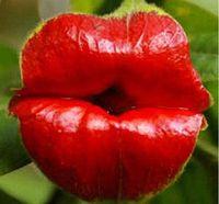 Семена цветущие Цены-50PCS Губы семена цветов редкие семена цветов для цветочные горшки цветочные горшки цветущих растений Растения Sementes-де-Флорес