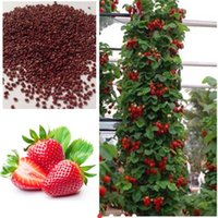 Cheap 100 piece Red Climbing Strawberry seeds, Garden Fruit Plant, Sweet And Delicious Can be juicy and delicious fruit free shipping