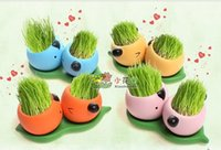 Wholesale REAL Grass New Arrival real planting grass little vase Good for gift decoration color qinqidou